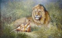 《狮子》金真赫(8500)19