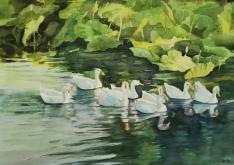 河边游过一群鸭